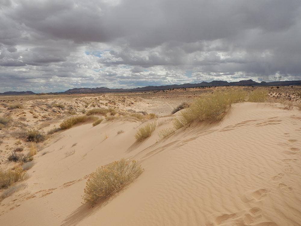 Dune7d